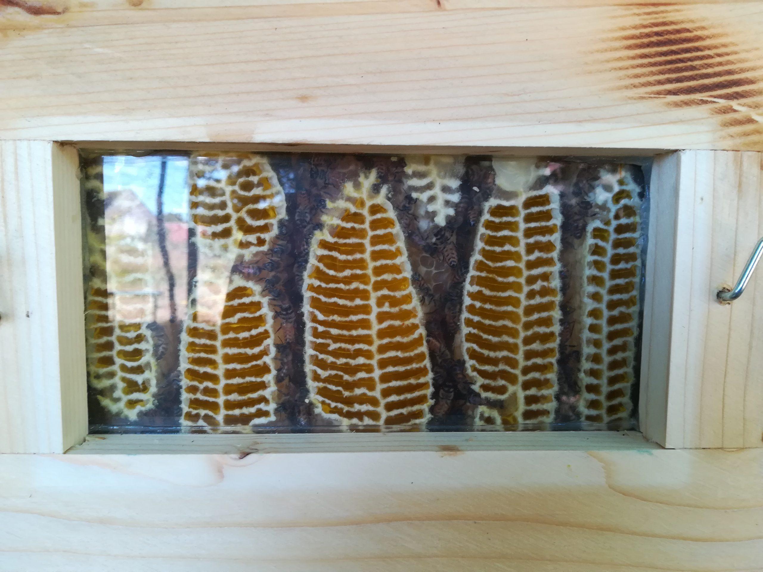 par la fenêtre, parfois, la reine des abeilles venait dire bonjour.
